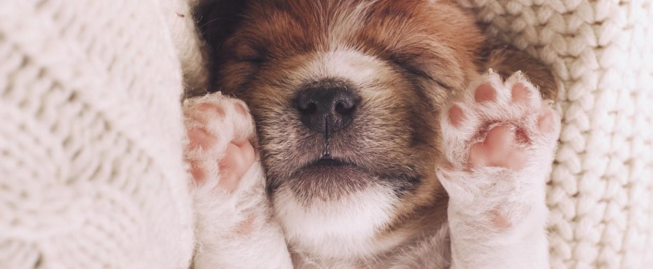 Das erste Lebensjahr des Hundes: Von der Geburt bis zum 12. Monat