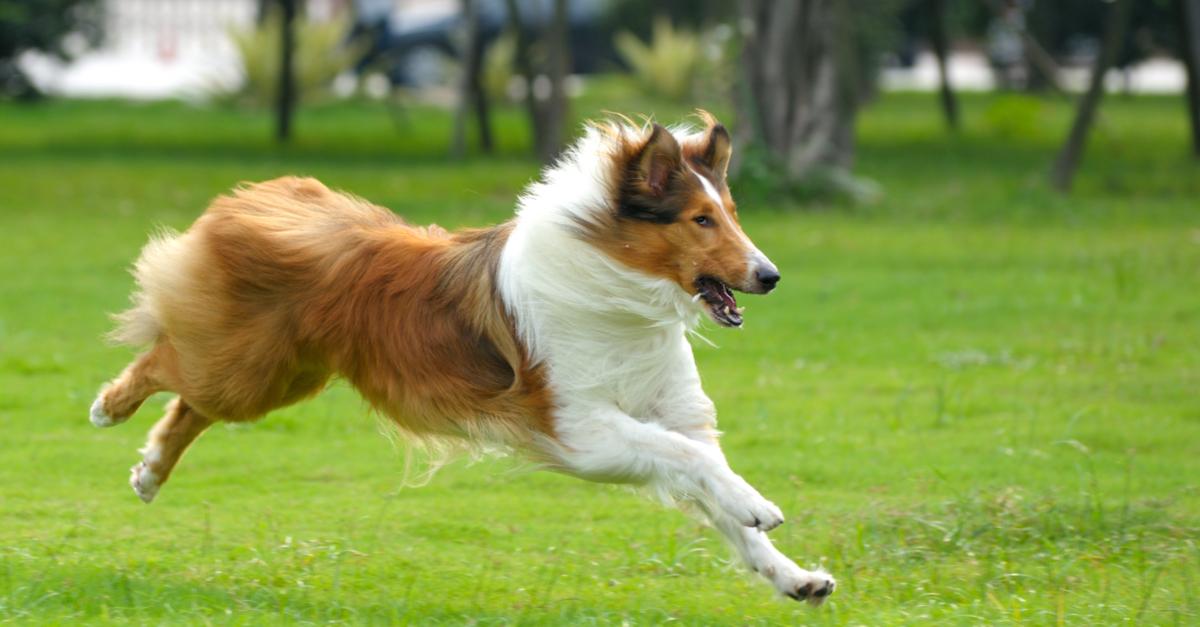 Bewegung und Beschäftigung für alle Hundetypen