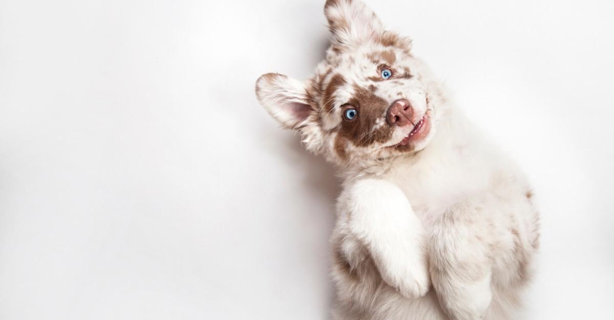 Glueckliche-Hunde