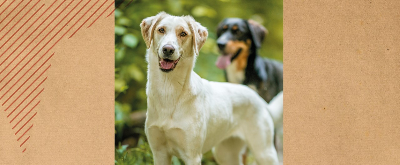 Die Wölfe & Hunde vom WSC: Panya
