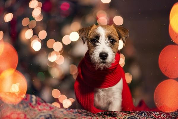 Weihnachten_TGS