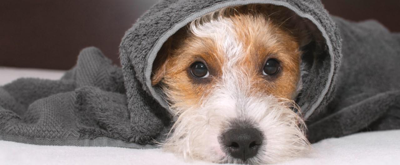 5 Dinge, die Hunde gar nicht leiden können!