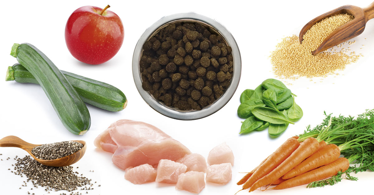 Getreidefreies Trockenfutter zum Wohl aller Hunde