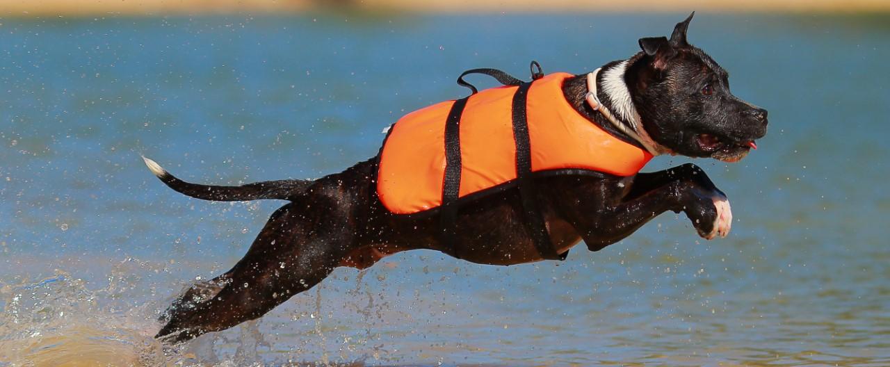 Hunde in Bewegung: Rettungshundesport