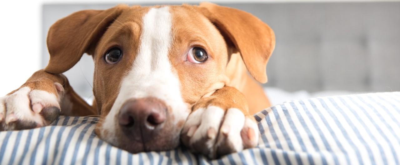 Hundesicherer Haushalt: Diese sechs Gefahrenquellen sollten Sie kennen