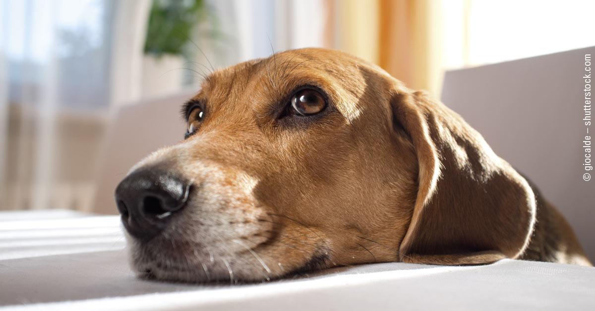 Der Becher-Trick – Gedächtnistraining für kluge Hunde