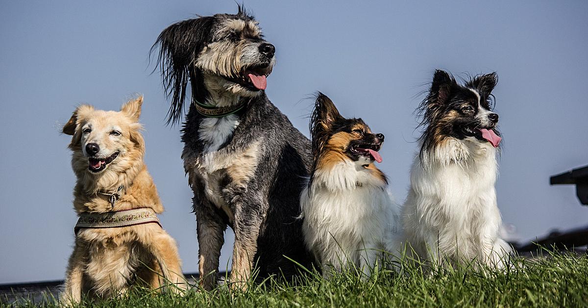 THE GOODSTUFF – zum Wohl aller Hunde in allen Lebenslagen!