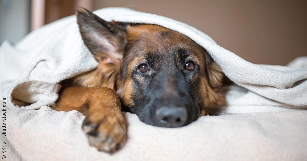 KAWUMMMM! Wie geht es Euren Hunden zu Silvester? Hier haben wir ein paar Tipps, was bei Angst helfen kann!