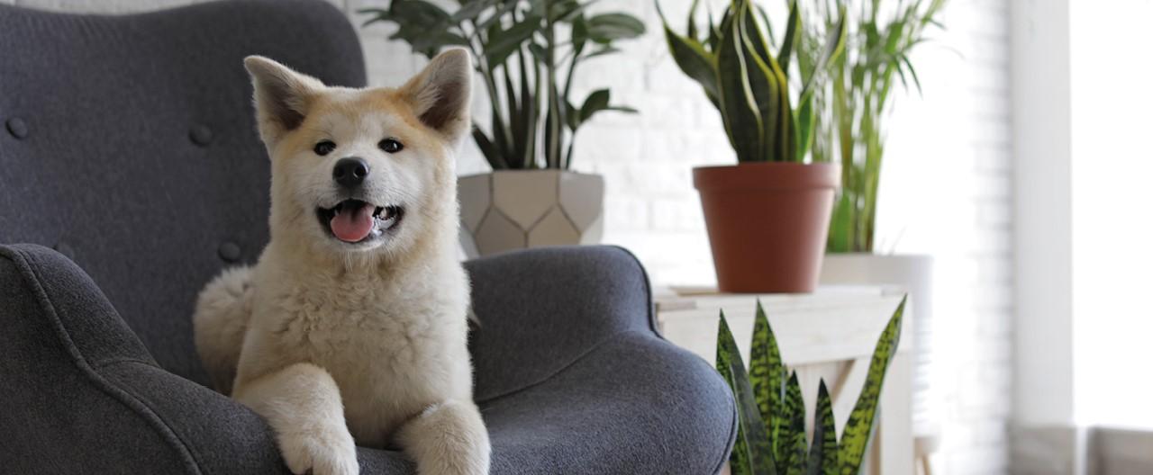 Welche Pflanzen sind giftig für unsere Hunde?