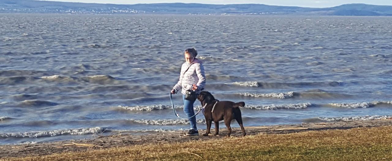 The Story of Sophie & Max: Der Labrador wird kastriert