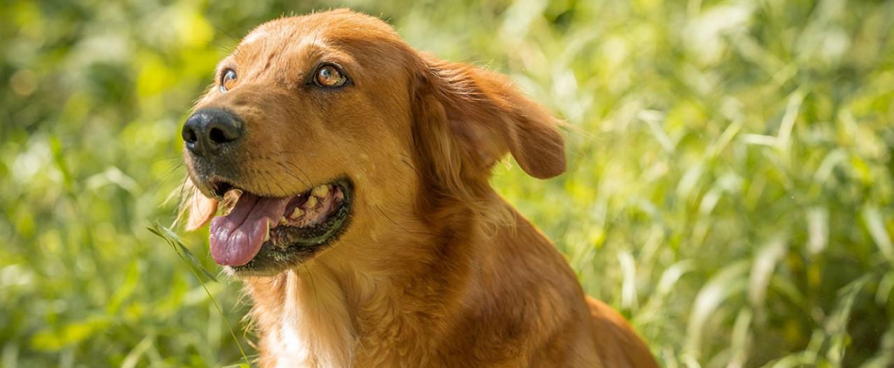 Die Wölfe & Hunde vom WSC: Zuri