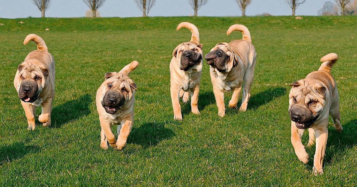 Warum auch sehr wählerische Hunde THE GOODSTUFF lieben!