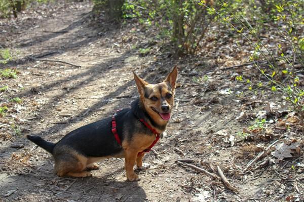 Tierheimhund-72dpi