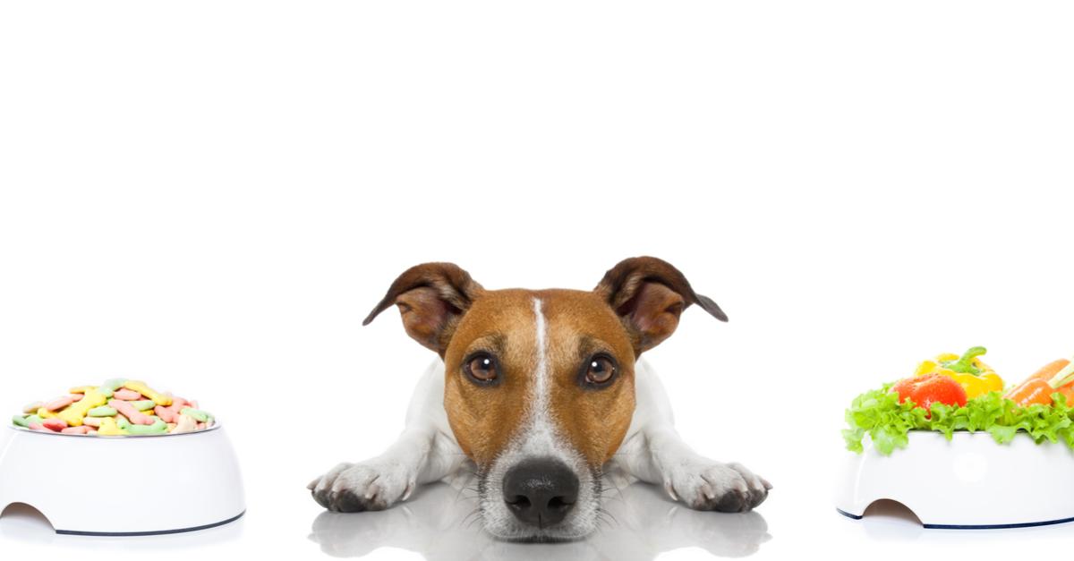 Die richtige Ernährung von Hunden