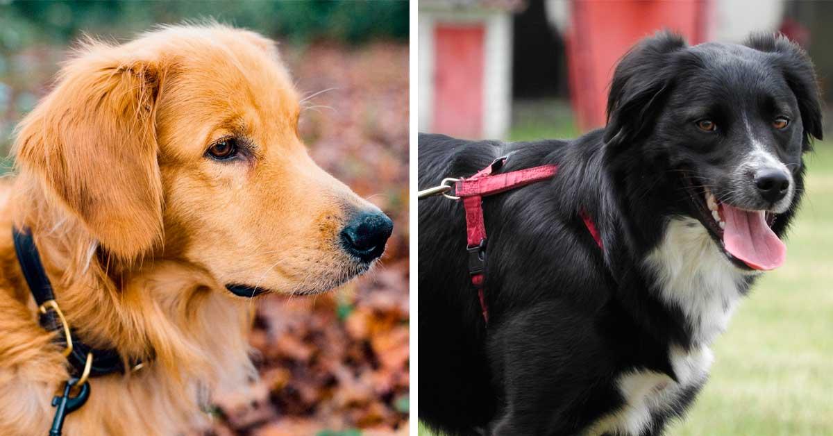 Halsband oder Brustgeschirr – was passt zu meinem Hund?