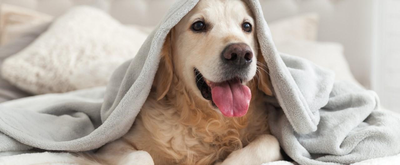 THE-GOODSTUFF_Die-Vermenschlichung-des-Hundes