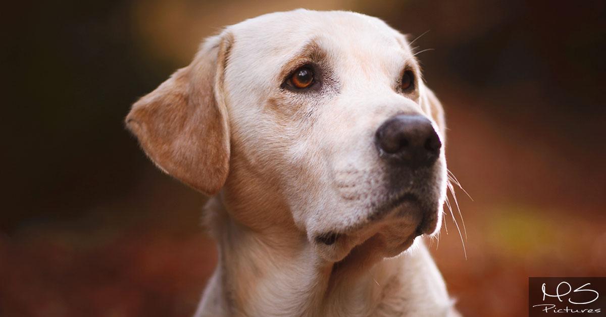 THE GOODSTUFF – die Trockenfutter-Revolution für Hunde!