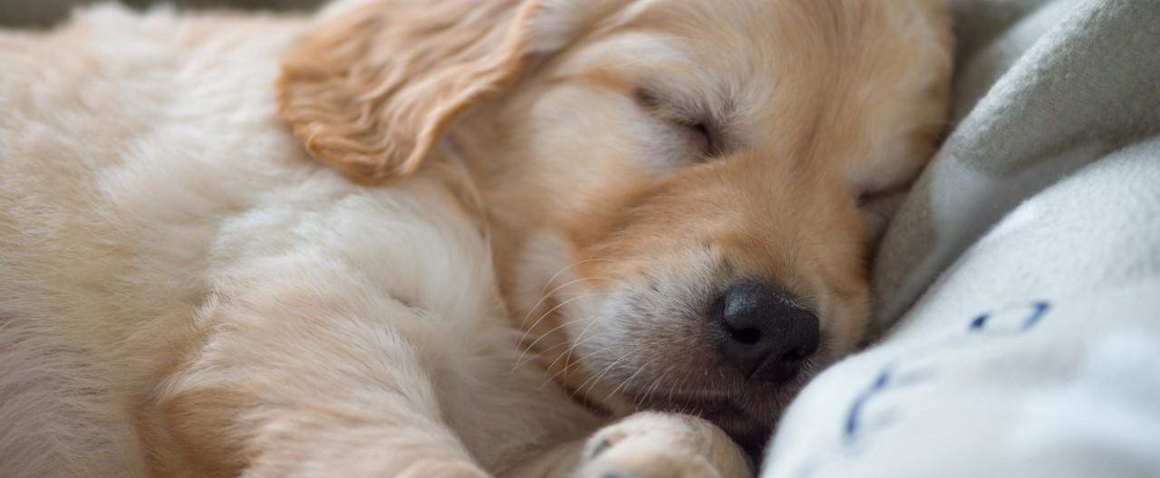 Ein Hund zieht ein - was ist zu beachten?