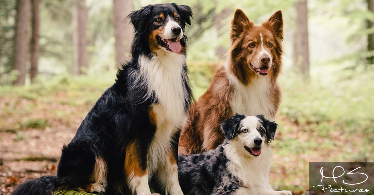 Trend Dogsharing! Gut oder schlecht?