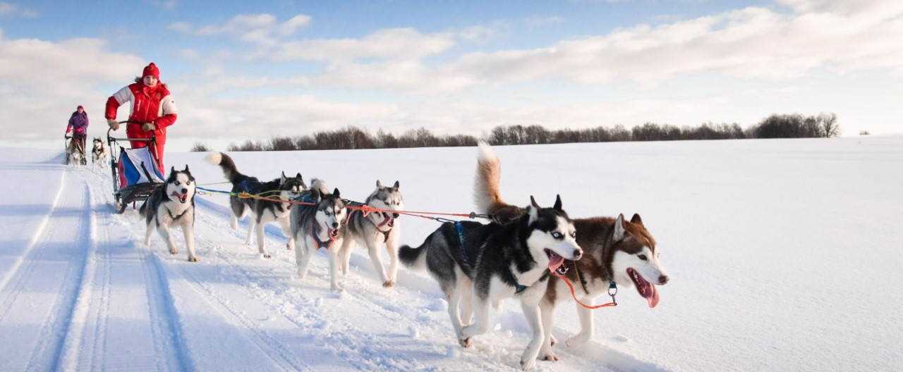Hunde in Bewegung: Zughundesport