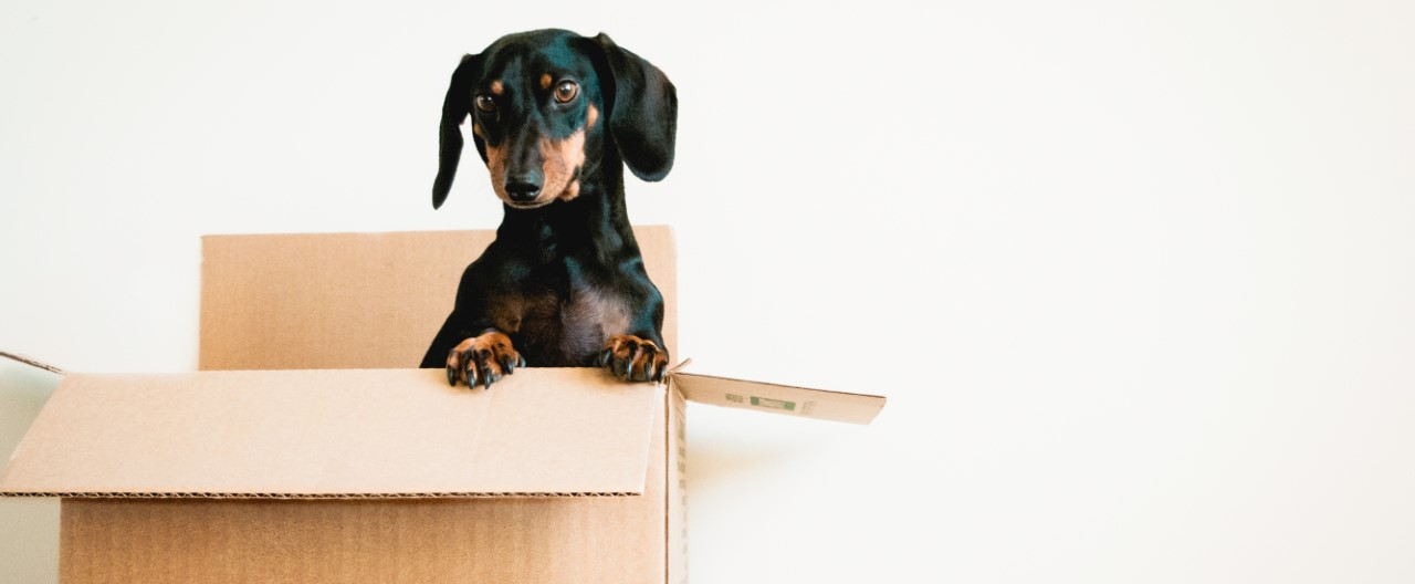 Umzug mit Hunden – so klappt die Eingewöhnung im neuen Zuhause