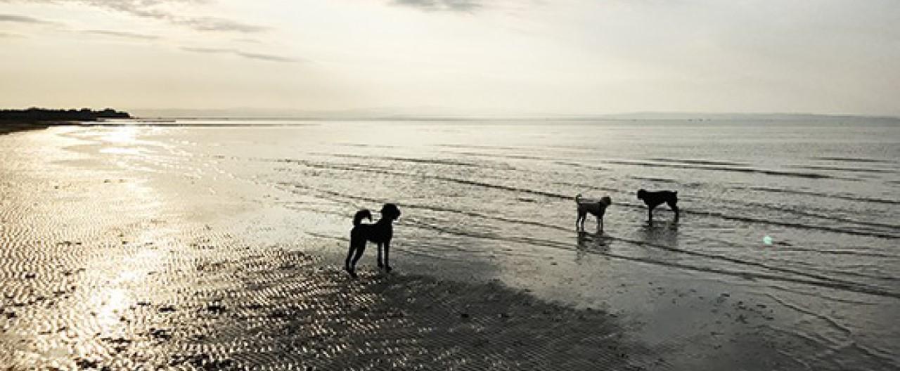 Wasserscheue Hunde: So klappt der Sprung ins kühle Nass