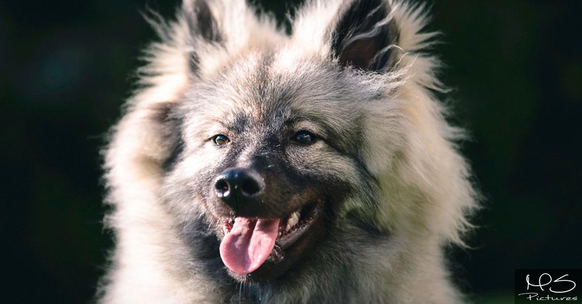 Warum unsere Futterzusammensetzung so viel für Ihren Hund tut!