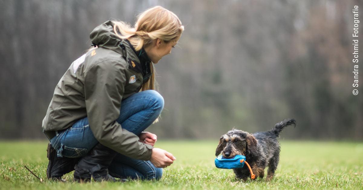 """Gastbeitrag von Conny Sporrer, Inhaberin der Hundeschule """"Martin Rütter DOGS Wien"""": Typgerechtes Training und Beschäftigung  – warum Gassigehen alleine nicht reicht"""