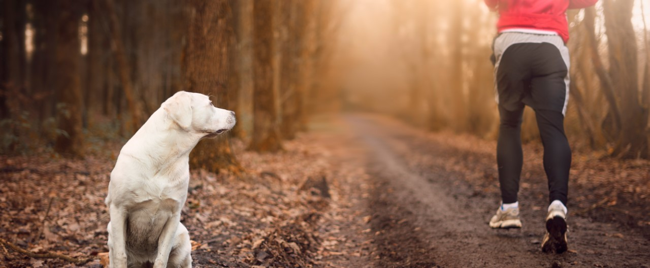 Angst vor Hunden – und was man dagegen tun kann