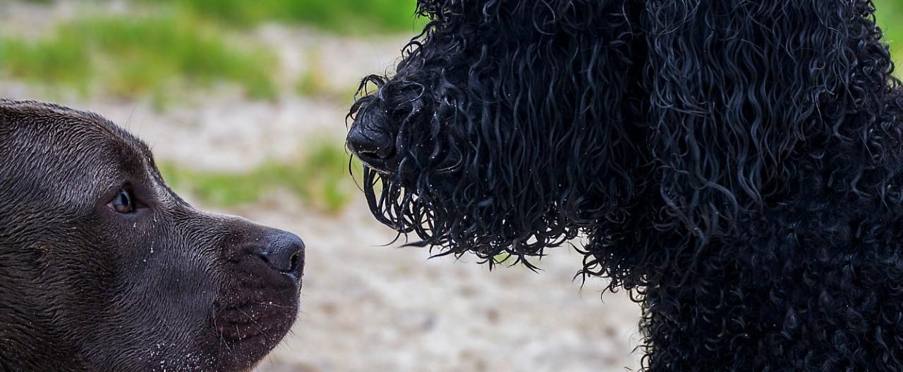 Hundebegegnungen leichter gemacht – hier gibt's 7 Tipps!