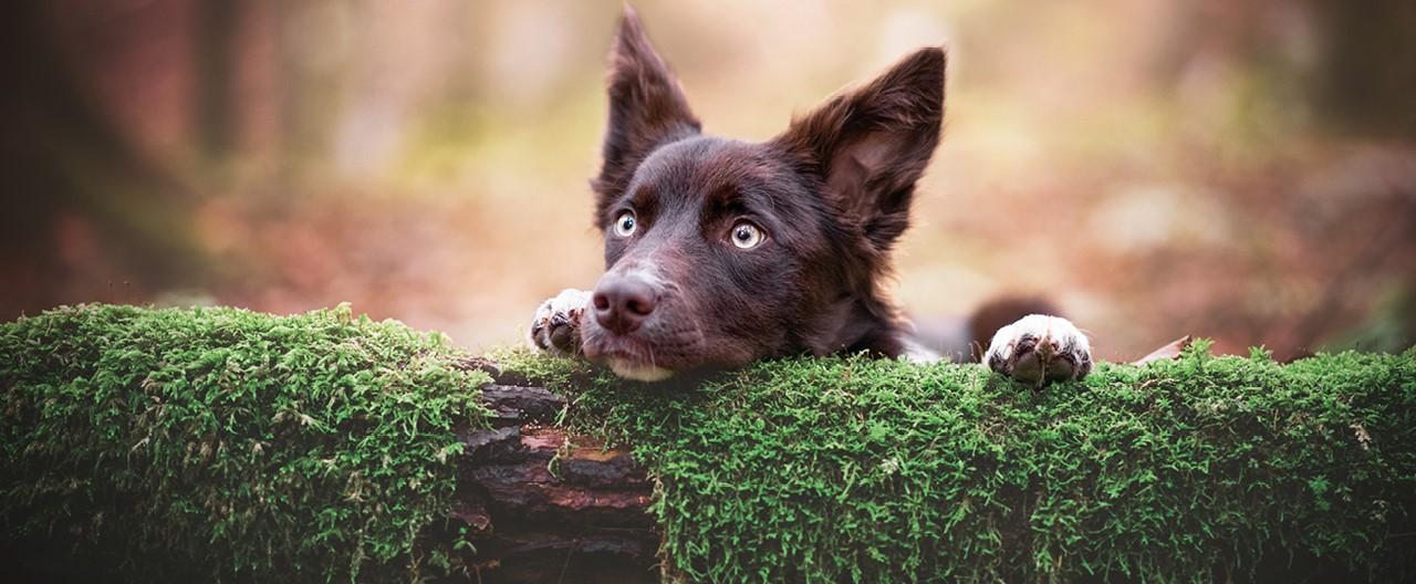 Hunde im Fokus: Interview mit der Fotografin Marina Reiter