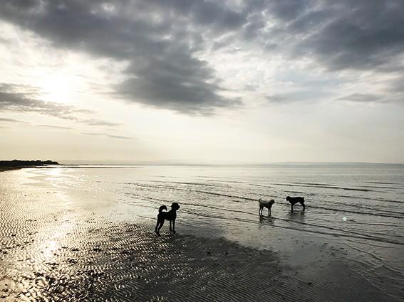 Wasserscheue_Hunde-min