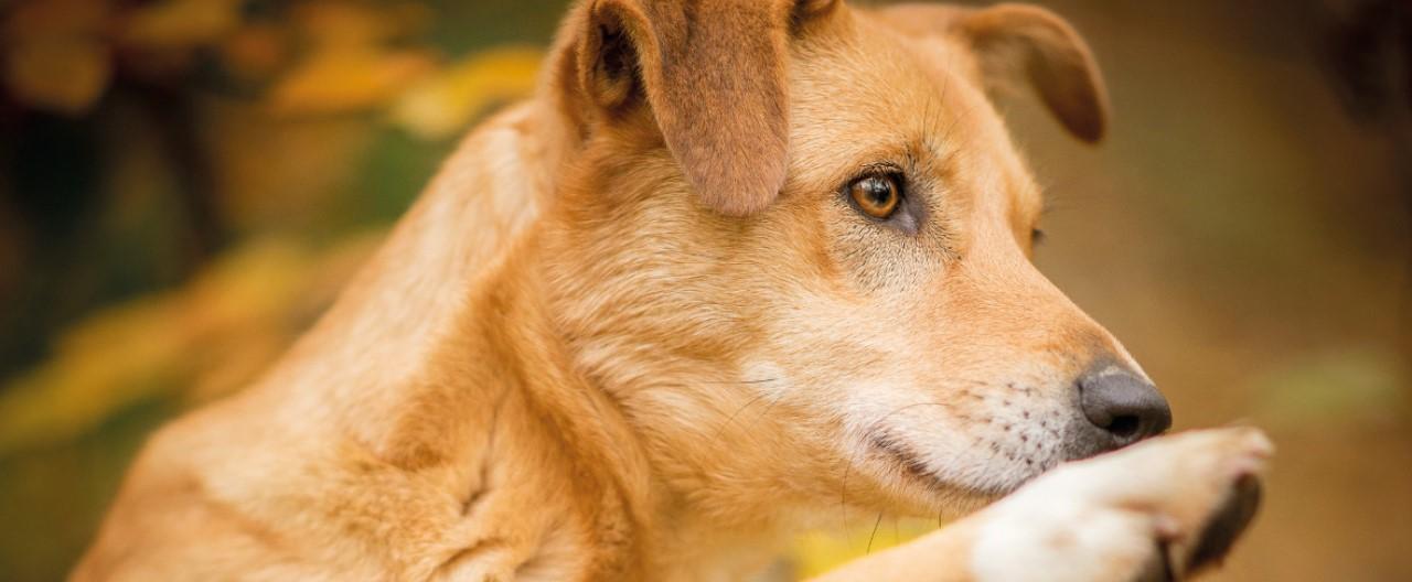 Die Wölfe & Hunde vom WSC: Imara