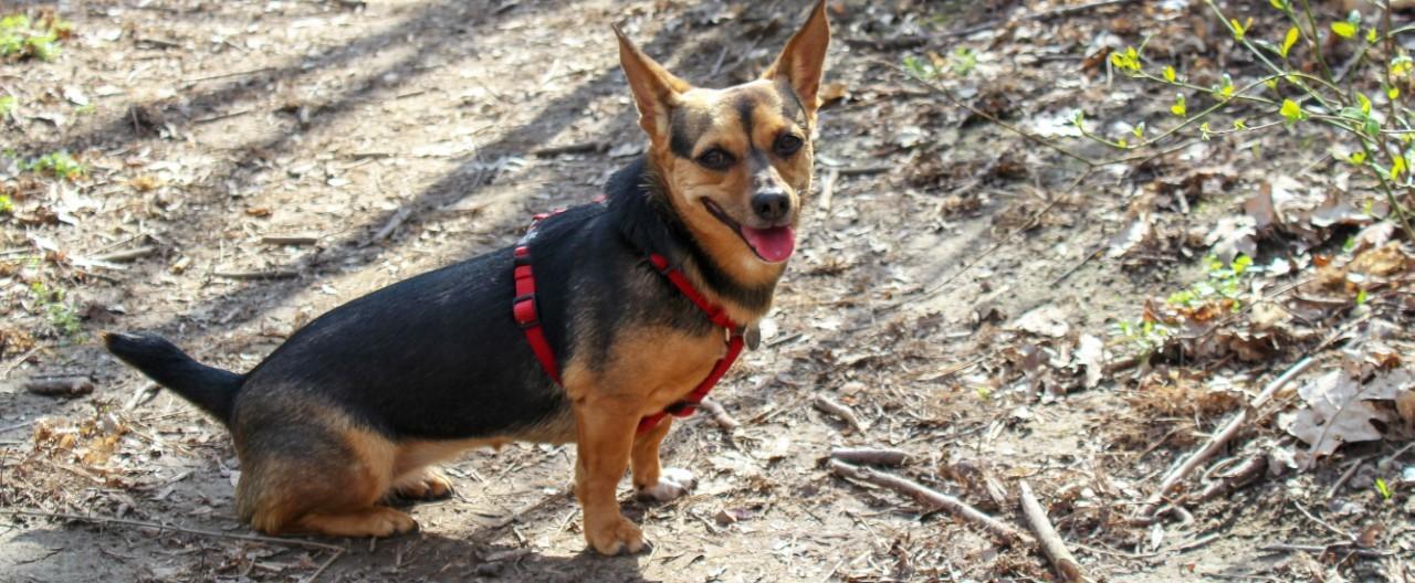 THE-GOODSTUFF_Entscheidungshilfe-fur-Tierheimhund