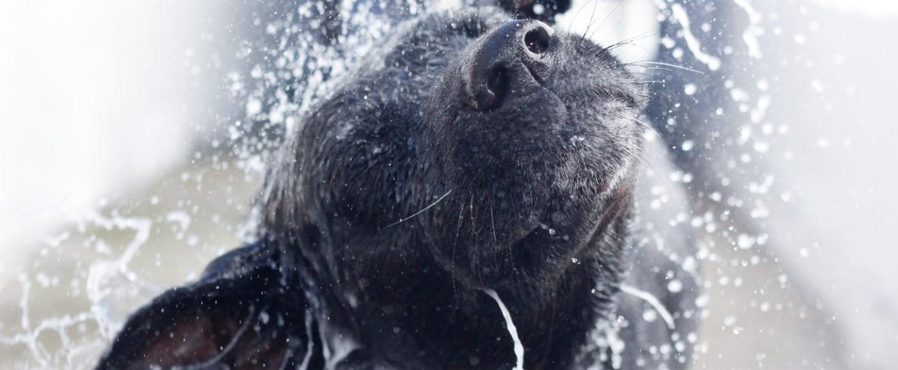 THE-GOODSTUFF_-Hunde-waschen