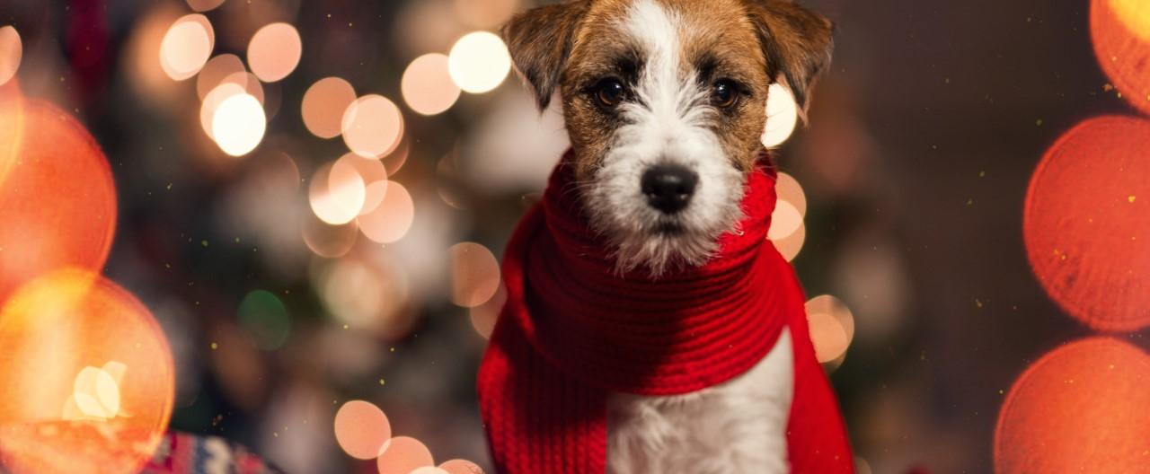 Sichere und unfallfreie Weihnachtszeit mit Hunden
