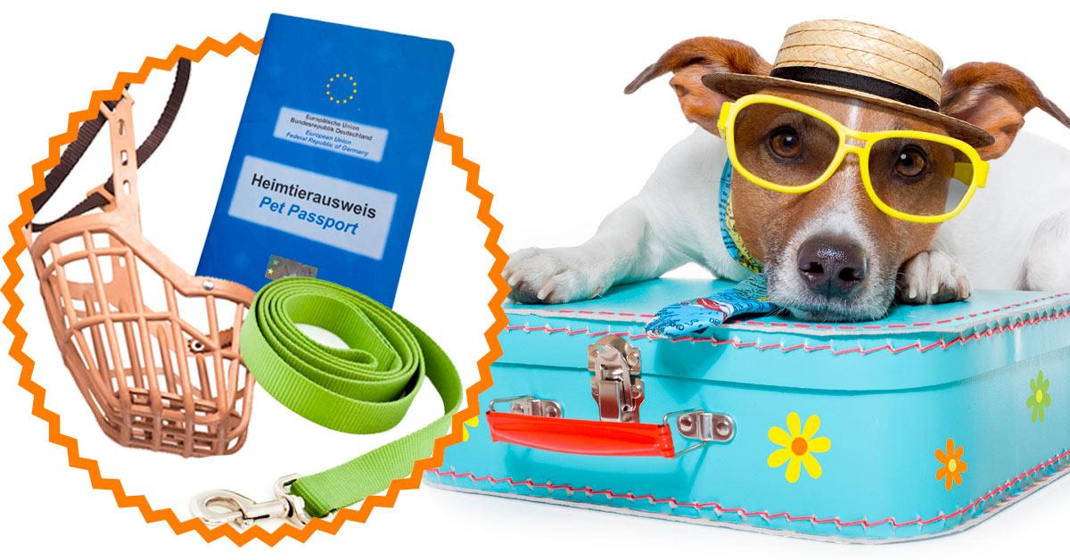 Einreisebestimmungen für Hunde in den beliebtesten Urlaubsländern