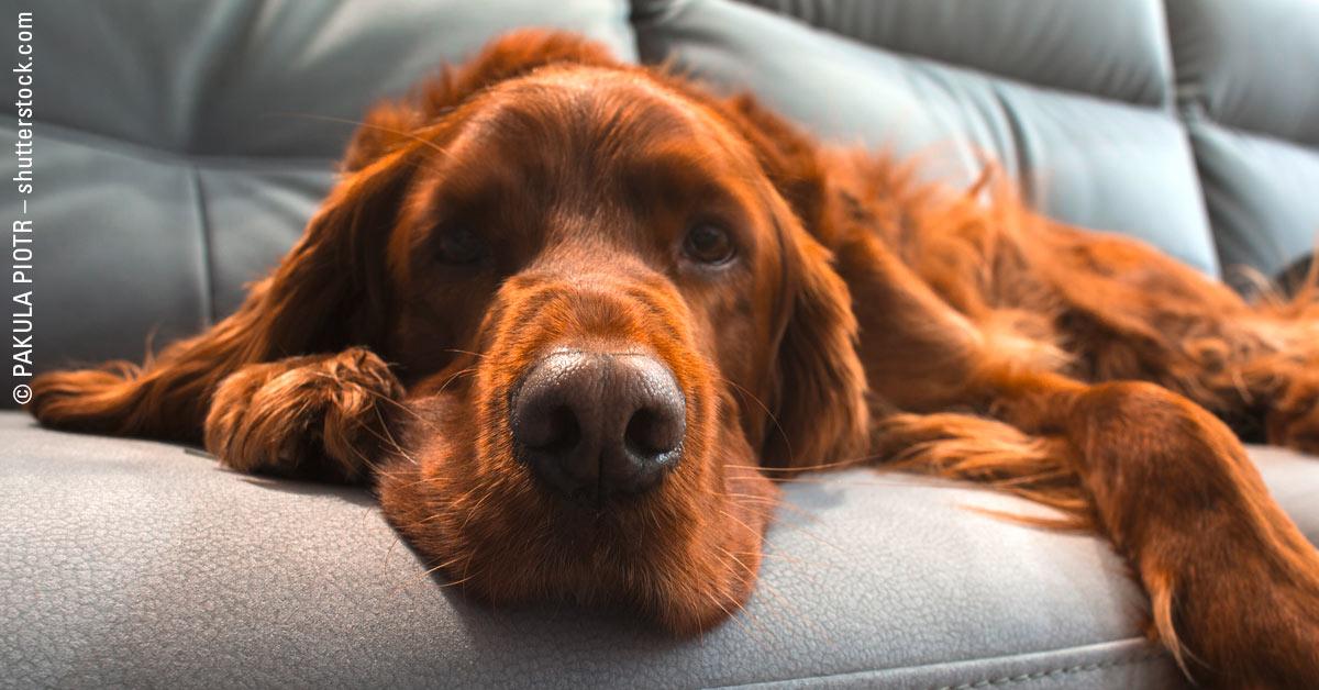 Hund auf der Couch – Okay oder No-Go?