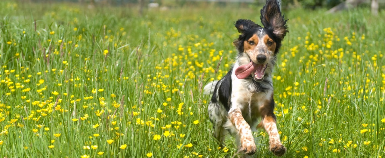 THE-GOODSTUFF_Zeckengefahr-beim-Hund