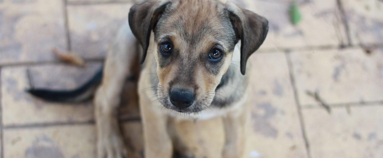 Illegaler Welpenkauf: Das schmutzige Geschäft mit dem Hund
