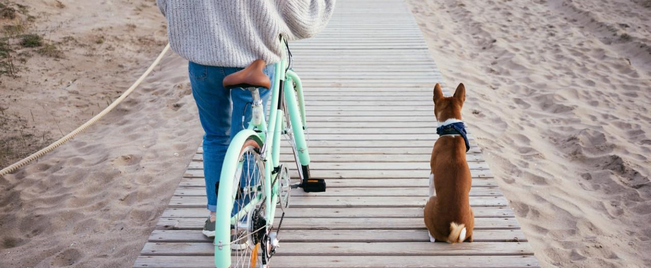 Radfahren mit Hund – wir haben die besten Tipps.