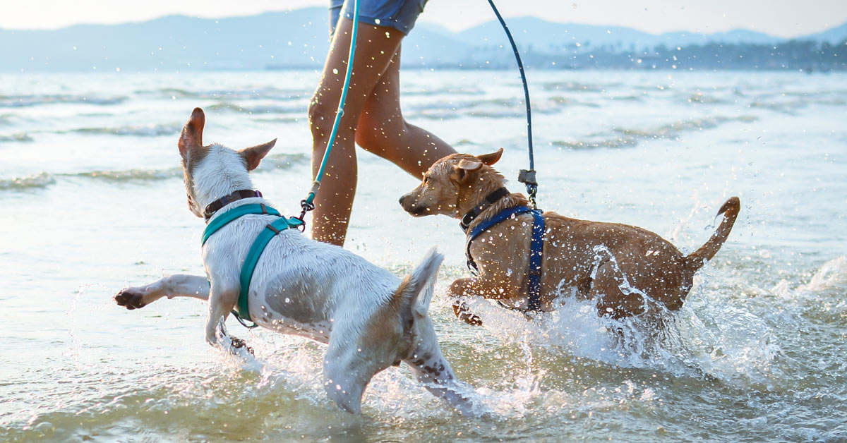 So wird Baden für jeden Hund zum Spaß!