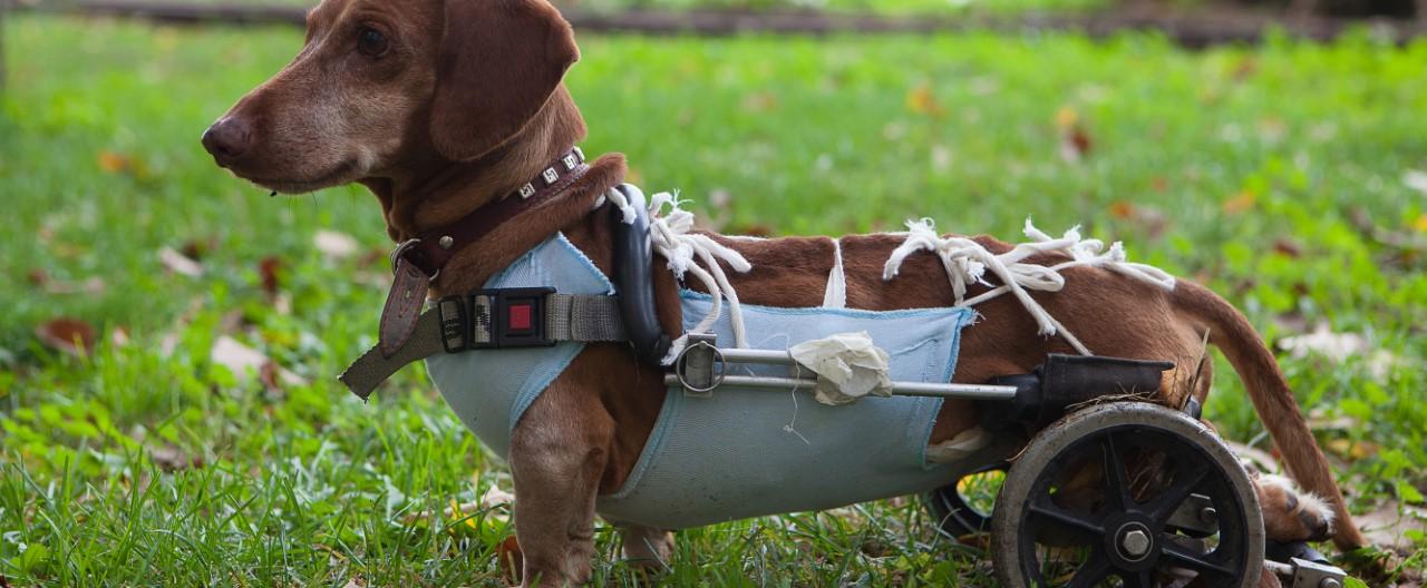 Hund mit Handicap: Ein Leben mit besonderen Bedürfnissen