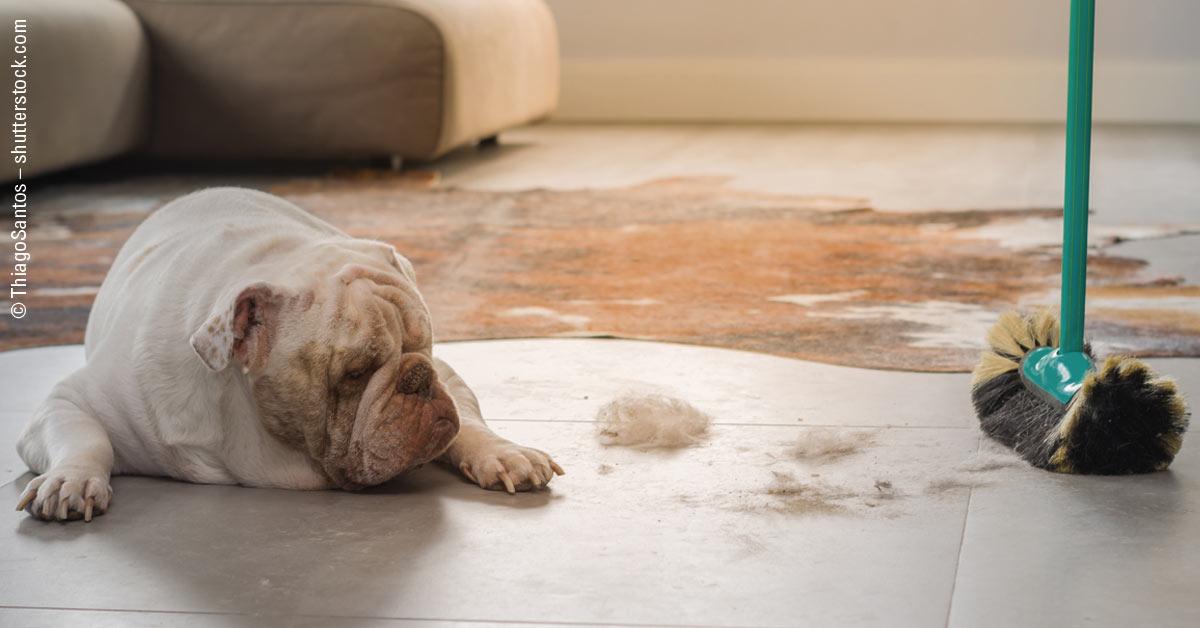 Hundehaare in der Wohnung – Hilfreiche Tipps und Tricks