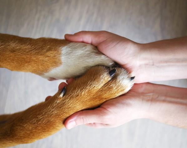 Hundeversicherung_72dpi
