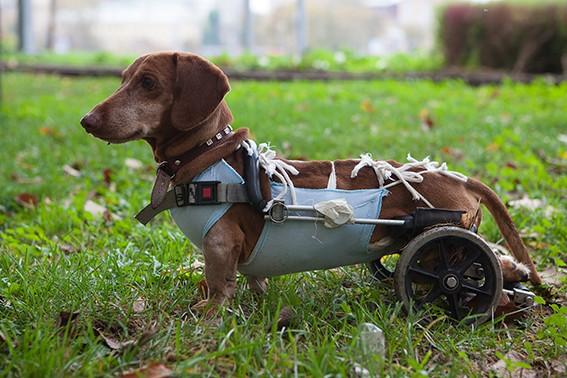 Hund_Handicap_72dpi