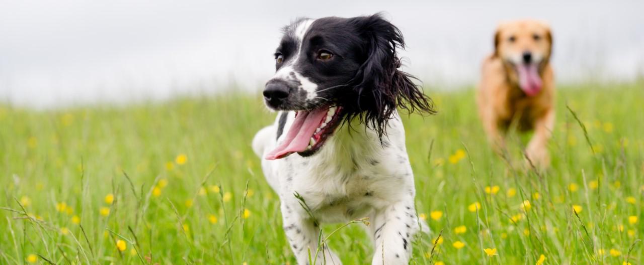Hyperaktivität bei Hunden: Diese Ursachen könnten der Auslöser sein