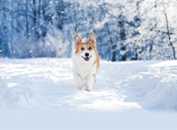 Hunde_im_Winter-min