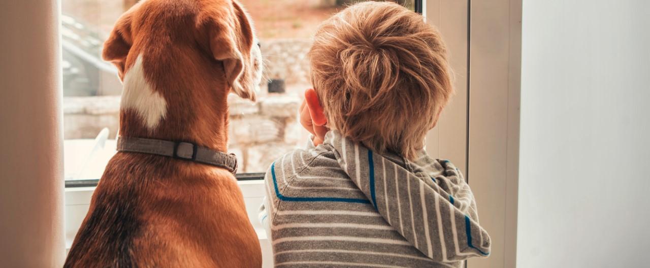 Vier Dinge, die wir von Hunden lernen können